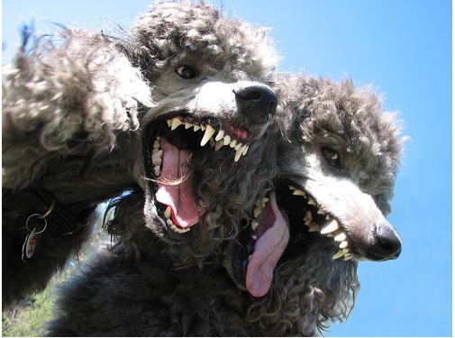 Rabidpoodles