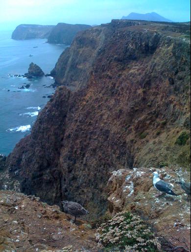Clifftop
