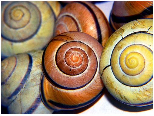 Snailshells