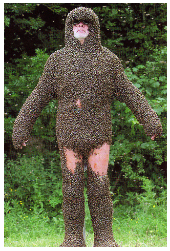 Beebody