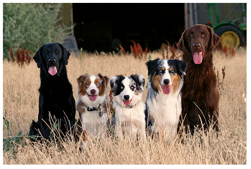 Fivedogs