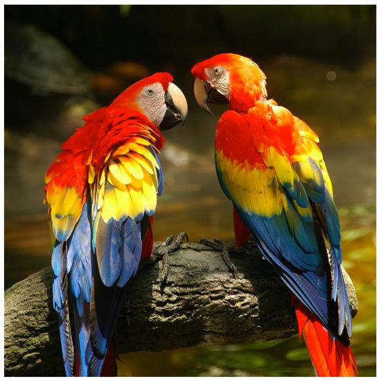 Parrotconversation