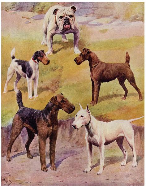 Fivedogs1