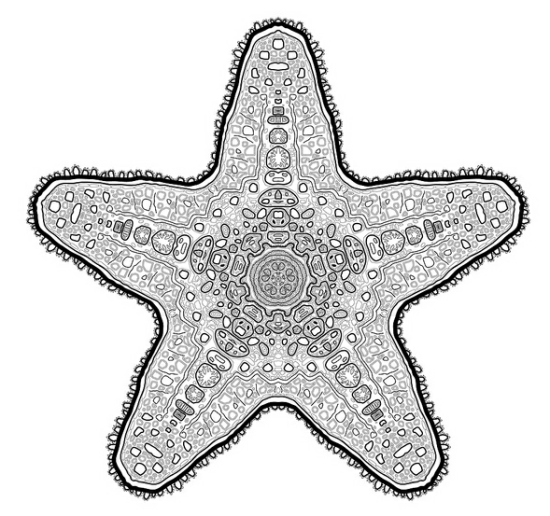 Starsketch