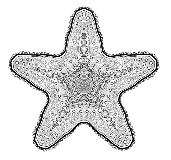 starfishlines