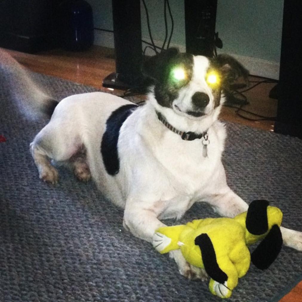 cyborg_dog